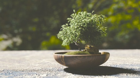 bonsai-1313531_960_720